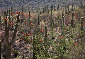 JamesCowlin-Desert Spring.jpg
