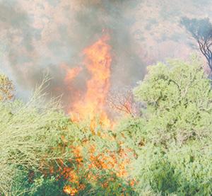 xWinkelman Fire_050.tif