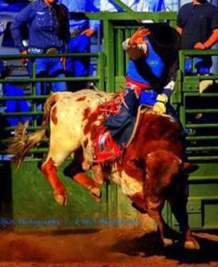 Bull Rider.jpg