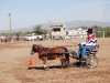 Southern Arizona Horse Expo_003