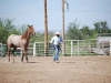 Southern Arizona Horse Expo_170
