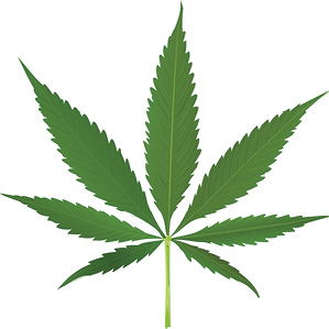 cannabis_leaf_vector.jpg